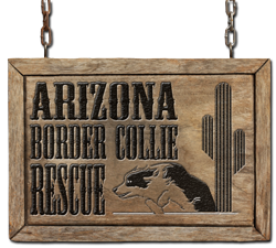 Arizona Border Collie Rescue